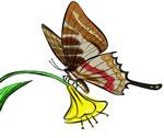 FREE Butterfly Clip Art 19