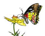 FREE Butterfly Clip Art 21