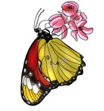 FREE Butterfly Clip Art 22
