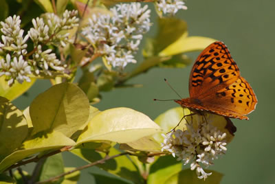 Photos of Butterfly